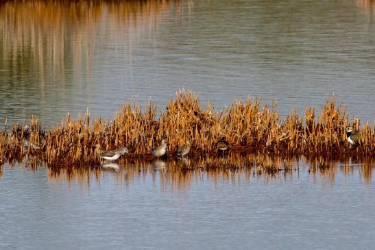 ornithologen-merseburg - Links